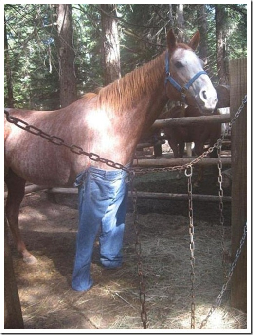 Horse wearing jeans