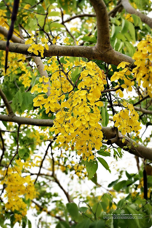 Yellow-flowers