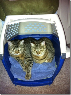 kitties in carrier 2