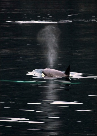 2013_08_Alaska 638