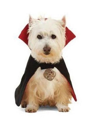 perros vampiro 1 2 (4)