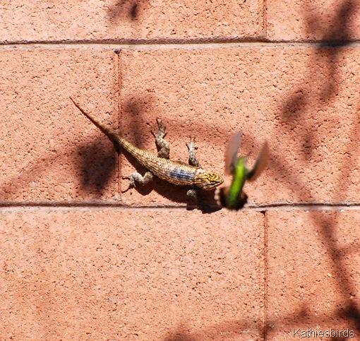 14. lizard n hummer-kab