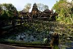 Le jardin du Lotus Café