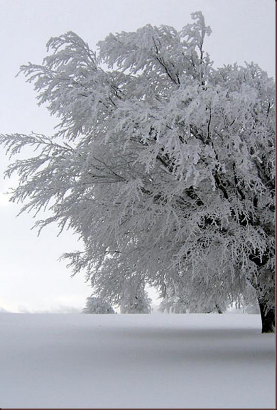 Selva Negra Imagen invernal