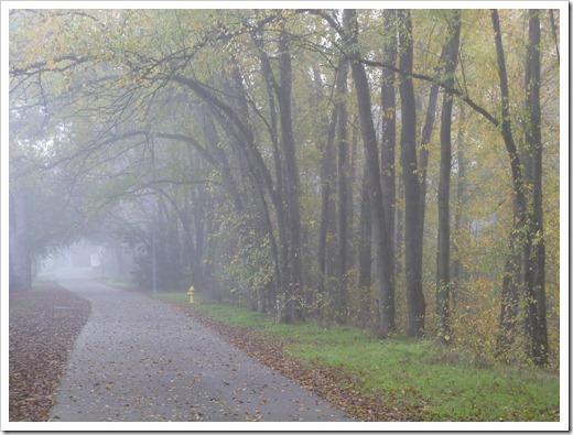 121211_fog_17