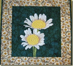 Crazy about daisies