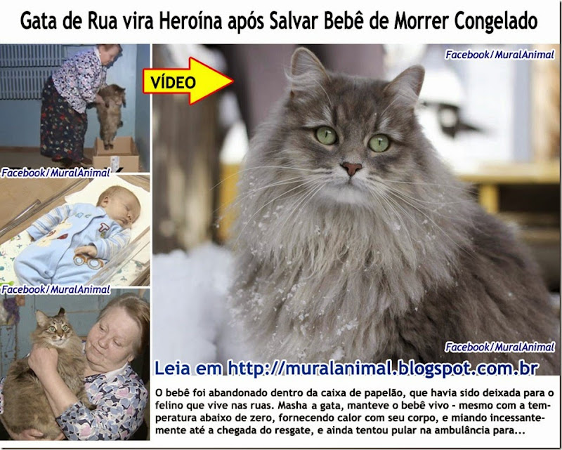 Gata_salva_bebe_russia