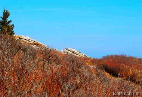 8. rocky shore-kab