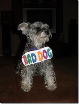 341031_bad_dog