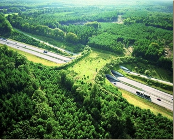 Ponts pour animaux - passages à faune (2)