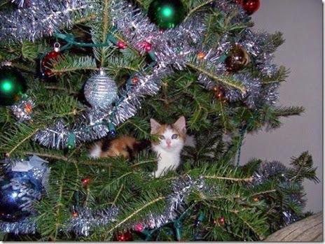 pets-hate-christmas-012