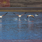 Arica - Parque Nacional Lauca  (46 de 48).jpg