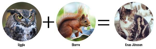 uggla ekorre=knas
