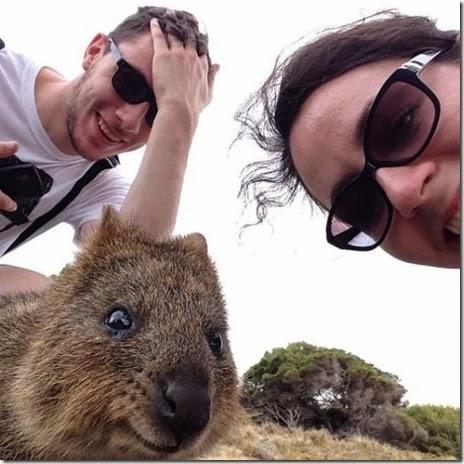 selfies-australian-quokka-017
