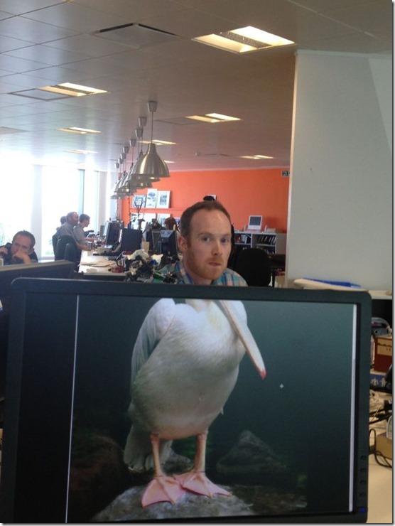 photobomb-coworkers-animal-30