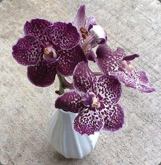 leftovers 1002421_523659644365957_1277269087_n sophisticated floral designs