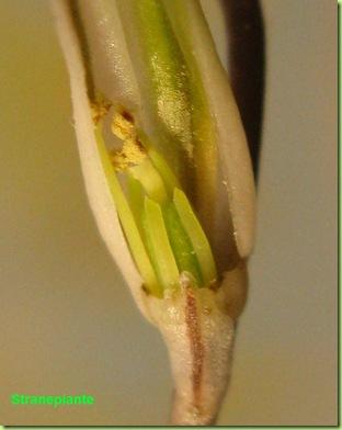 fiore rin