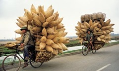 honoi-cyclists-007