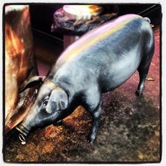 silver pig at la Boqueria