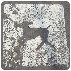 Hunde er velkomne til at ligge HELT fladt på asfalten uden line på!