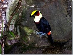 2004.08.25-032 toucan