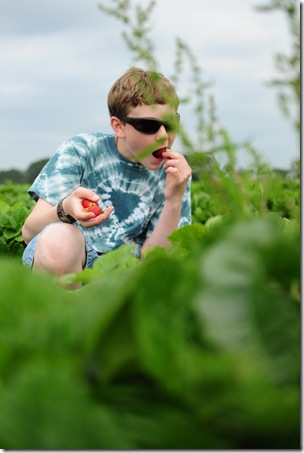 Strawberry Picking & Marcus band 057