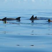 plywanie z delfinami.1.jpg