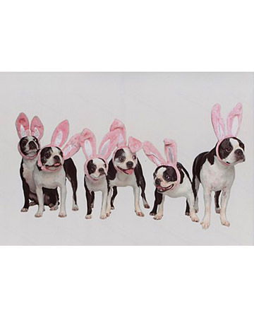 A warren of rabbits... hmmm... but what's the name for a gathering of pups in bunny ears?