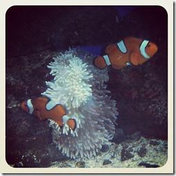 findingnemofish