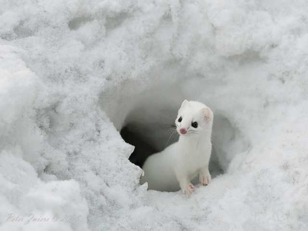 Cute Baby Animal Gif