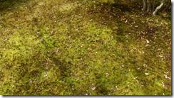 螢幕截圖 2014-08-19 14.43.54