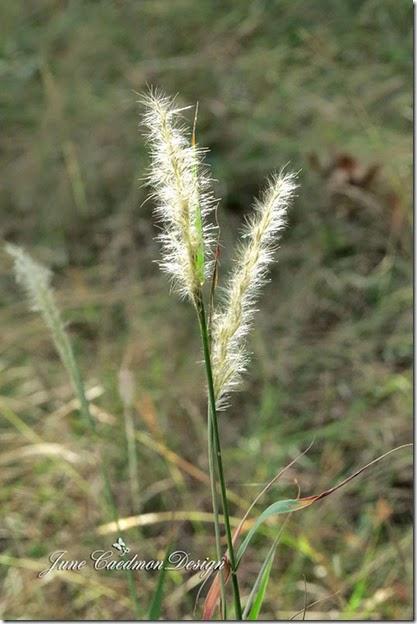 Grasses_light