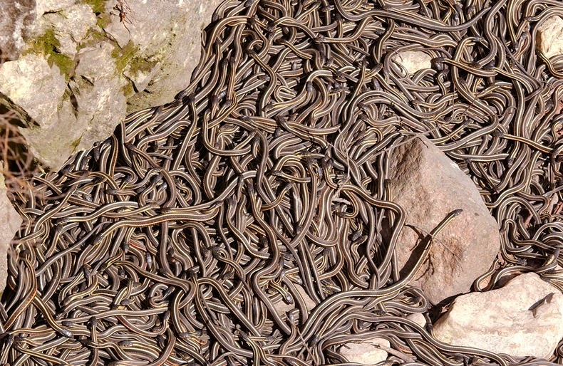 narcisse-snake-pits-1