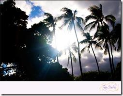 Destination Wedding Hawaii   253