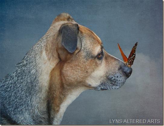 sam profile with butterfly on nose kk isobel copy