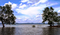 Erik_Horstman_Mangrove_lifeline_Kantang_Estuary,Thailand.JPG