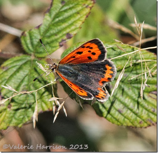 26-small-copper