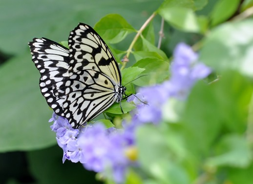 2013-07-05 butterfly pavilion (14)