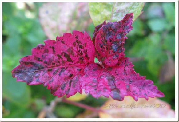 11-26-roseflake-hib