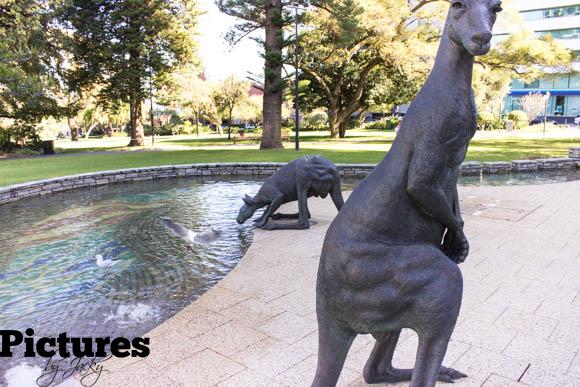kangaroos-perth-pictures-by-jack