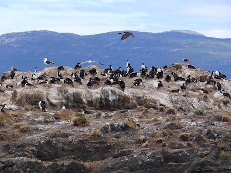Tara de Foc: Insula cormoranilor
