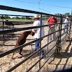 Loading Goats October 2013