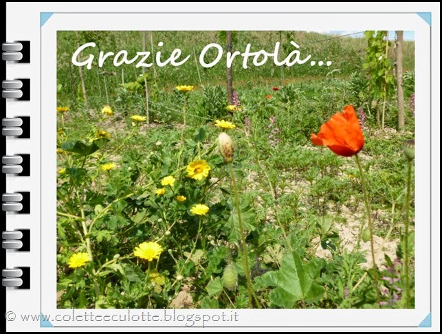 Fioritura all'OrtoLà (1)