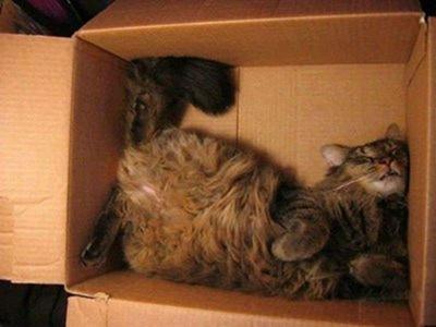 Cats Will Sleep Anywhere 26