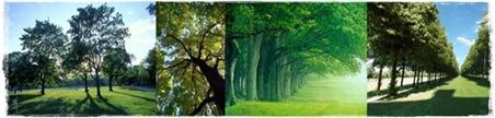 träd1-horz