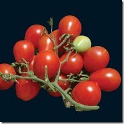riesentraube cherry