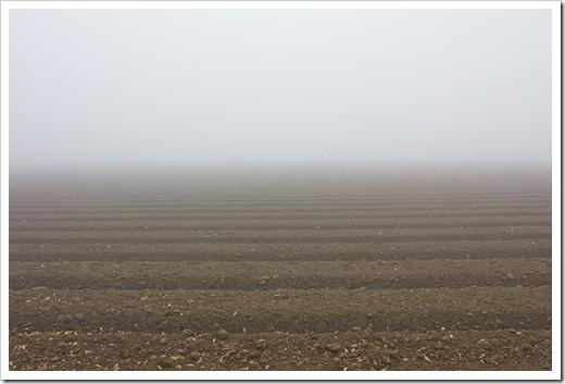 111220_fog_field