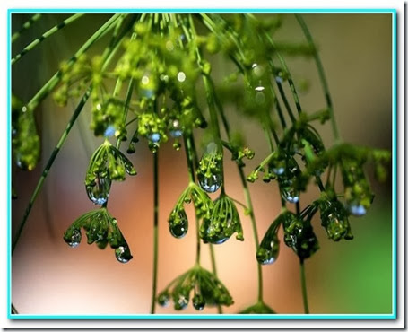 Gota de natureza