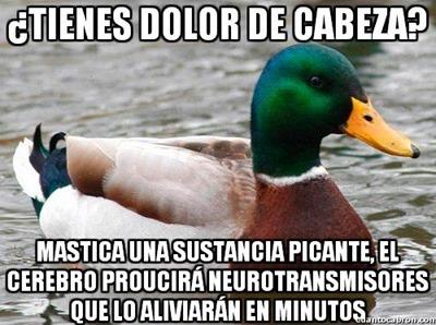 consejos del pato (2)