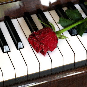 romance... by Almas Bavcic - Artistic Objects Musical Instruments